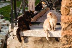 Römische Katzen, die auf alten Ruinen sitzen Italien stockbild