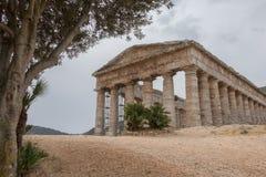 Römischer Tempel unter Olivenbaum in Segesta Stockfotografie