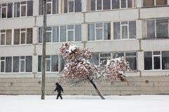 Rönn i snö Arkivfoto