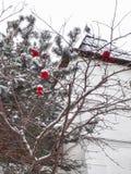 Rönnbär i snö fotografering för bildbyråer