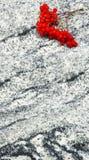 Rönnen förgrena sig med grupper av mogna bär på viscountvit gr Arkivfoto