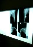 Röntgenstrålar på veterinären Arkivfoto
