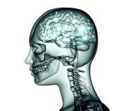 Röntgenstrålebilden av det mänskliga huvudet med hjärnan och elkraft pulserar stock illustrationer