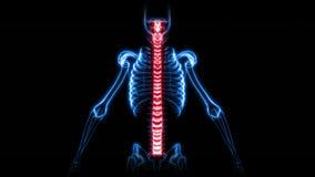 Röntgenstrålebildläsning av det mänskliga skelettet (HD) arkivfilmer