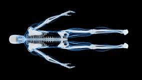 Röntgenstrålebildläsning av det mänskliga skelettet (HD) stock video