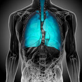 Röntgenstraal van blauwe menselijke Longen Stock Afbeeldingen