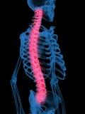 Röntgenstraal van column.jpg Stock Foto's