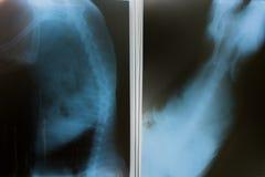 Röntgenstraal voor hond stock afbeelding
