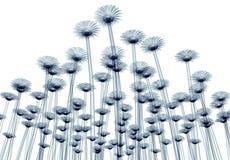 Röntgenstraalbeeld van een bloem op wit, gebera wordt geïsoleerd die Stock Afbeelding