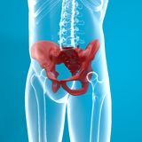 Röntgenstrahl des menschlichen Körpers der Pelvis Lizenzfreies Stockfoto