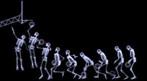 Röntgenstrahl des menschlichen Skeleton spielenden Basketballs Lizenzfreies Stockbild