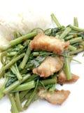 Rör Fried Water Spinach med chili och soya och frasigt griskött på den vita maträtten som isoleras på vit bakgrund, thailändsk ma Fotografering för Bildbyråer