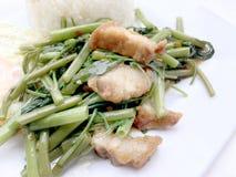Rör Fried Water Spinach med chili och soya och frasigt griskött på den vita maträtten som isoleras på vit bakgrund, thailändsk ma Royaltyfri Bild