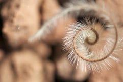 Röra sig i spiral speergräs i nedgång Royaltyfri Fotografi