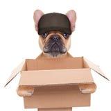 Rörande askhund Royaltyfria Bilder