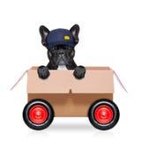Rörande askhund Royaltyfri Fotografi