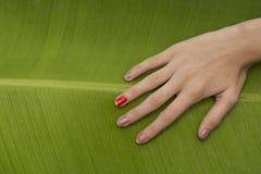 Rörande blad för bananträd vid handen fotografering för bildbyråer