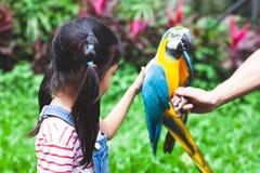 Rörande fjäder för gullig asiatisk barnflicka av den härliga arapapegojan arkivfoton