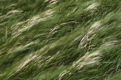 Rörande grässuddighet Arkivfoto