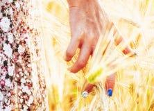 Rörande guld- vete för kvinnahand royaltyfri fotografi