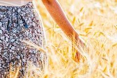 Rörande guld- vete för kvinnahand royaltyfri foto