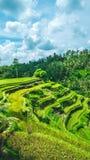 Rörande regniga moln över fantastiska tegalalangris terrasserar fältet med härliga palmträd som växer i kaskaden, Ubud, Bali Arkivbilder