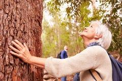 Rörande träd för hög kvinna i skogen, man i bakgrunden royaltyfri bild