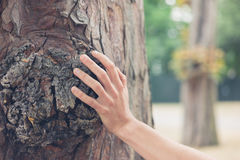 Rörande träd för kvinnlig hand i skog arkivfoto