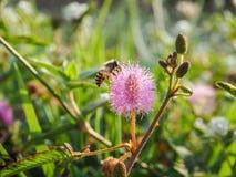 Rörelse av biet Fotografering för Bildbyråer