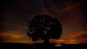 Rörelse av den mjölkaktiga vägen, moln och stjärnor bak enkelt träd stock video