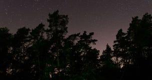 Rörelse av stjärnor bak skogträd arkivfilmer