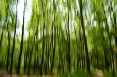 Rörelse för skog in camera Royaltyfri Bild