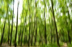 Rörelse för skog in camera Arkivfoton