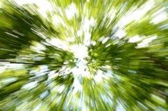 Rörelse för trädkronor in camera Arkivfoto