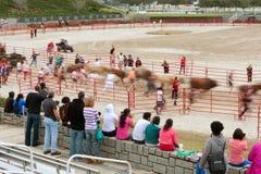 Rörelsesuddighet av folk som kör med tjurar som åskådareklockan Royaltyfria Foton
