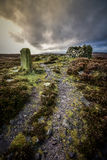 Röse Yorkshire Heather Moorland för gränssten Arkivfoto