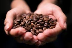 Röstkaffee-Bohnen schließen herauf die Meinung, die von der Frau in schalenförmigen Händen vertreten wird stockfoto