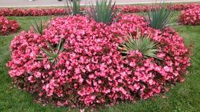 Rötere Blumen stockbilder