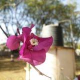 Rötliche Blumen Lizenzfreies Stockbild
