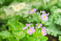 Rötliche purpurrote kleine Blume, die Gemüse als Hintergrund hat stockbild