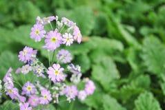 Rötliche purpurrote kleine Blume mit grünem Hintergrund lizenzfreie stockbilder