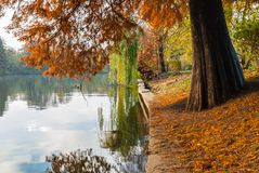 Rötlicher Laubbaum nahe dem See Weide herein reflektiert im Wasser Lizenzfreie Stockbilder