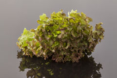 Rötlicher und grüner Kopfsalat Stockbild