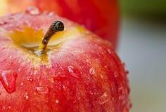 Rött äpple Arkivfoto