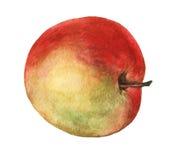 Rött äpple Hand dragen vattenfärgmålning Royaltyfri Fotografi