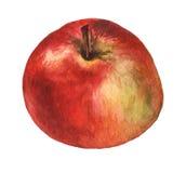 Rött äpple Hand dragen vattenfärgmålning Royaltyfri Foto