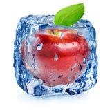 Rött äpple i is arkivbilder