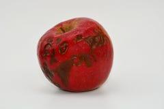 Rött äpple med parasit Arkivfoto
