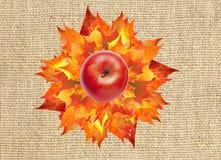 Rött äpple på färgrik höstlönnlövbukett på linne Fotografering för Bildbyråer