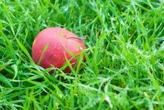 Rött äpple på gräs arkivbild